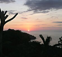 SUNSET SILHOUETTE by Tania Richley