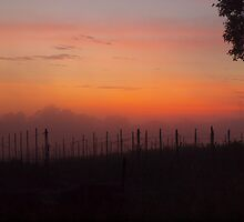 sunrise over the vines by shippy56