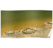 Cervantes - Lake Thetis Stromatalites Poster