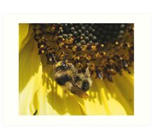 Happy as a Bee in... Art Print