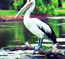 Pelican by edyazry
