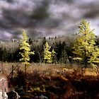 Indian Summer in the North Country by Wayne King
