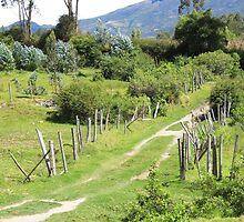 Dirt Path Through a Pasture by rhamm