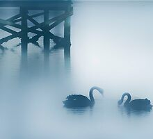 Black Swans by Angelika  Vogel