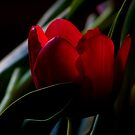 For You My Love... by GerryMac