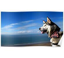 Sea Dog Poster