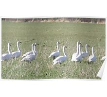 Goose Stepping Poster