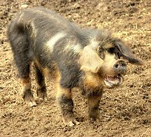 Ernie, The Incredibly Hairy Laughing Pig by VoluntaryRanger