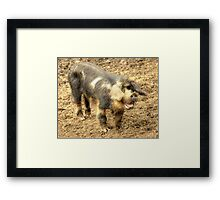 Ernie, The Incredibly Hairy Laughing Pig Framed Print