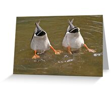 Synchronized Diving Greeting Card
