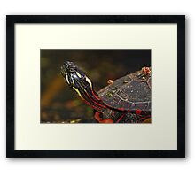 Painted Turtle Portrait  Framed Print