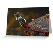 Painted Turtle Portrait  Greeting Card