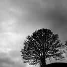 Tree by Luke Stevens