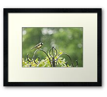 Great tit in the rain  Framed Print
