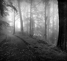 Misty Bend, Mount Davidson by Richard Mason