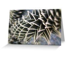 Frozen Chilean Pine Greeting Card