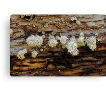 fur clusters Canvas Print