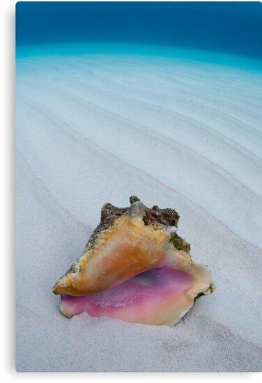 Shell by muzy