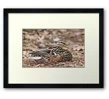 Camouflage Duck  Framed Print