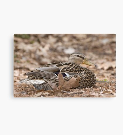 Camouflage Duck  Canvas Print