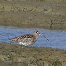 Curlew 01 by Sharon Perrett
