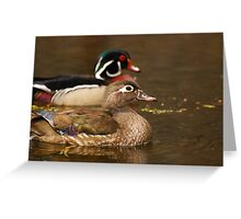 Wood Duck Courtship Greeting Card