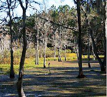 08-119 ~ Swamp in the sunlight by djyoriginals