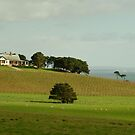 Spray Farm,Bellarine Peninsula by Joe Mortelliti