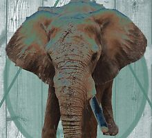One tusked Elephant by Katelyn Hindman
