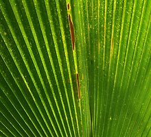 Abstract leaf I by MDPhotographic