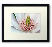 Sweet Magnolia  Framed Print