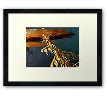 Delicate Dragon sea horse  Framed Print