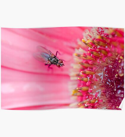 Fly to the Flower Poster