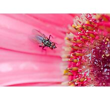 Fly to the Flower Photographic Print