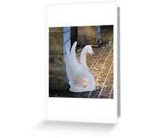 A  swan lost in town Greeting Card