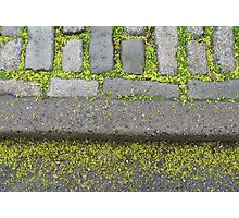Sidewalk in Central Park: Leafy brick thing Photographic Print