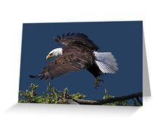 Graceful Manoeuvres Greeting Card