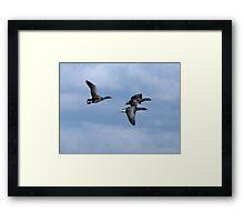 Brent Geese Overhead Framed Print