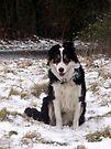 Snow Laddie by Michael Haslam