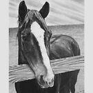 Commissioned Horse Portrait by J.D. Bowman