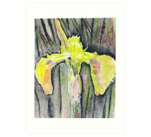 Yellow Iris on Onion Paper Art Print