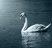 By the light of the Swan by Mark Snelling