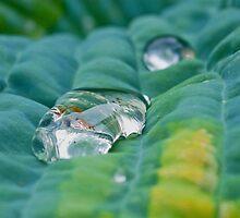 green cushion by Lifesfun