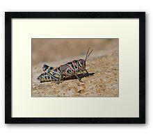 Colorful Grasshopper Framed Print