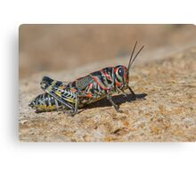 Colorful Grasshopper Canvas Print