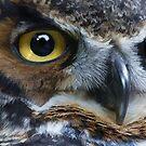 Great Gray Owl Eyes by Skye Ryan-Evans