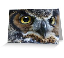 Great Gray Owl Eyes Greeting Card