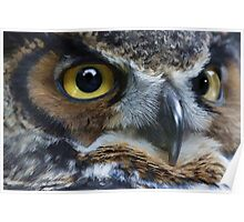 Great Gray Owl Eyes Poster