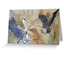 Battling Gray Herons Greeting Card