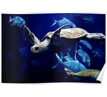 Swimming with the Fishes Poster